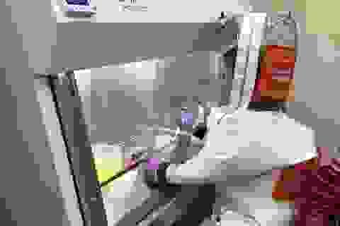 """Cách điều trị mới cho Covid-19: Sử dụng """"miếng xốp"""" tí hon để bảo vệ phổi"""