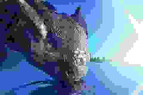"""Phát hiện mới về """"sát thủ"""" giết chết hầu hết các loài khủng long"""