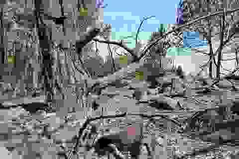 Cảnh rừng hoang tàn sau nhiều đợt cháy lớn liên tiếp