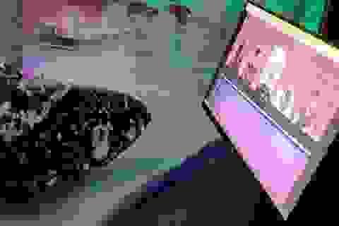 Sợ cá buồn, công viên dành riêng màn hình cho cá... xem phim