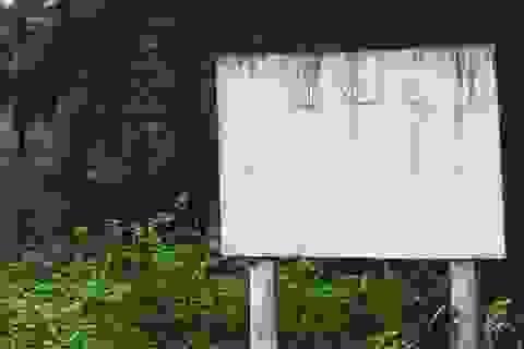 Nghệ An thanh tra các BQL rừng phòng hộ để chặn sai phạm
