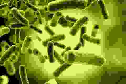 Điều trị ung thư bằng cách cho vi khuẩn ăn sạch lõi của khối u