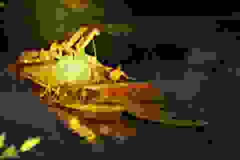 """Tiếp tục bắt quả tang tàu hút cát nửa đêm """"rút ruột"""" sông Ngàn Phố!"""