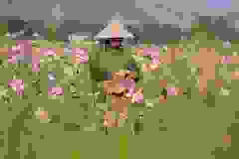 Hà Tĩnh: Kiếm tiền từ thu hoạch sen cuối vụ