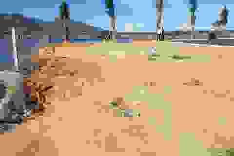 Vụ phân lô bán nền ven đầm Thủy Triều Khánh Hòa: Chính quyền huyện nói gì?
