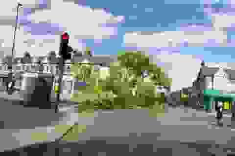 Clip ghi trọn khoảnh khắc cây cổ thụ đổ ập do gió mạnh