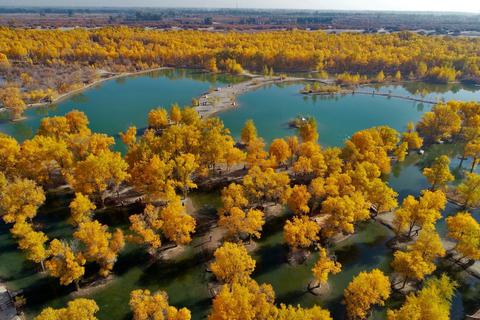 40 năm kiên trì, người phụ nữ biến hoang mạc thành thiên đường vạn cây xanh
