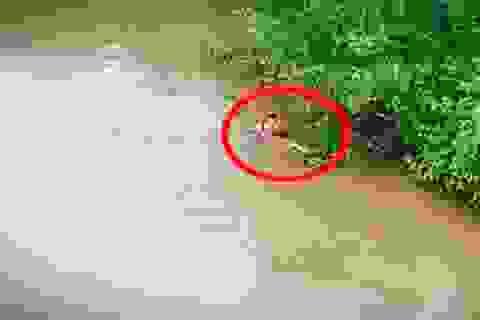 Hai anh em ruột cùng lao xuống sông cứu người phụ nữ nhảy cầu
