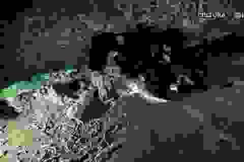 Phát hiện mỏ cổ kỳ lạ 12.000 năm tuổi dưới nước ở bờ biển Mexico