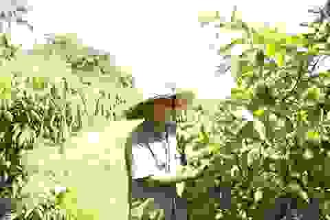 """""""Lão gàn"""" biến đất sỏi đá thành vườn cây ăn quả, thu hàng trăm triệu mỗi năm"""