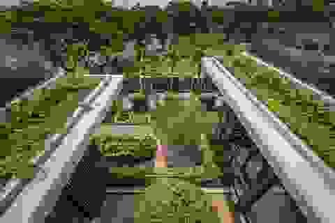Cuộc sống bình yên trong biệt thự vườn rợp bóng cây xanh ở Cần Thơ