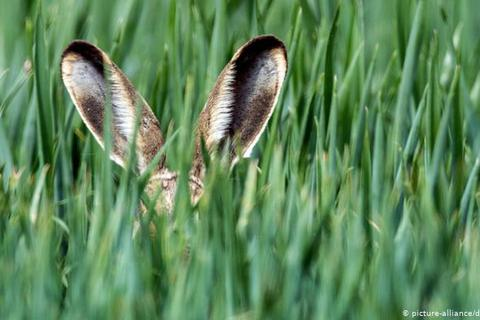 Nghe không chỉ bằng tai: Những loài vật có thính giác siêu việt