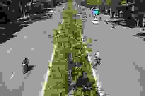 Hàng phong lá đỏ vẫn xanh tươi giữa những ngày nắng nóng ở Thủ đô