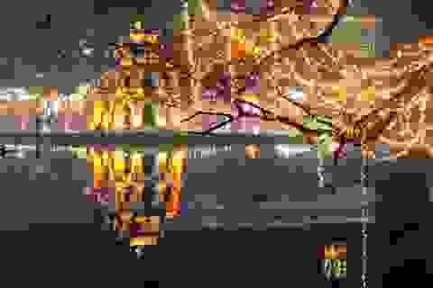 The Manor Central Park: Biểu tượng tinh hoa giữa dòng chảy toàn cầu