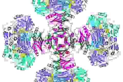 Bí ẩn enzyme nửa thế kỷ đã được giải quyết