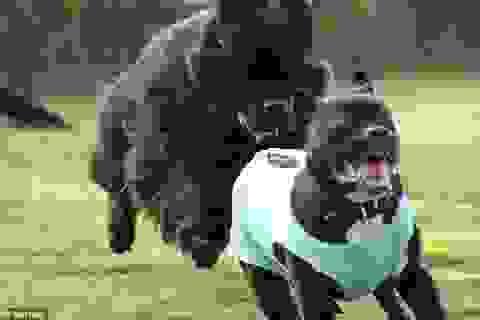 """Những tình huống """"khó đỡ"""" của thú cưng khiến bạn không thể không bật cười"""