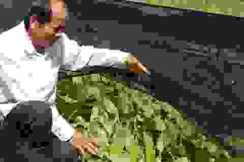 Khởi nghiệp trồng rau ở tuổi 50, bước đầu kỹ sư thu 15 triệu đồng/tháng