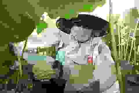 Nông dân thắng lớn, thu cả trăm triệu đồng nhờ trồng sen lấy hạt
