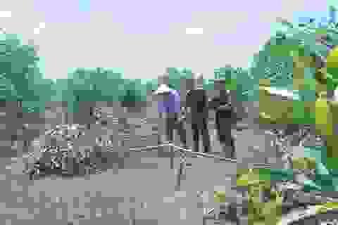 """Bị đe dọa khi thả bò ở vườn keo, bèn chặt phá hơn 700 cây keo để """"cảnh cáo"""""""