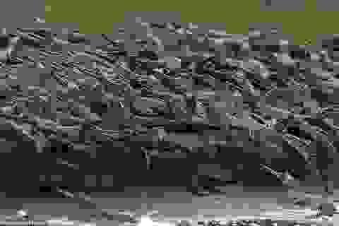 """Ngộ nghĩnh hàng trăm con cá sấu con """"xếp hàng"""" vượt sông"""