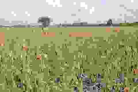 Vinasoy và những thành tựu mới trong việc chọn tạo giống mới và phát triển vùng nguyên liệu