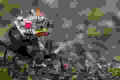 Chế tạo thành công camera siêu nhỏ lắp trên lưng bọ cánh cứng
