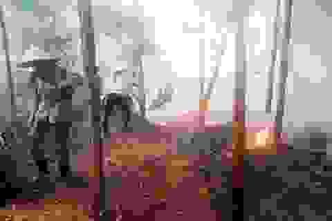 Hơn 300 người căng mình chữa cháy rừng thông