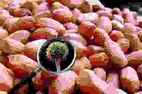 20 mg gây tử vong, chất hay xuất hiện trong bếp của người Việt