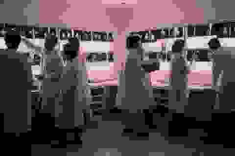 Trí tuệ nhân tạo sàng lọc nhanh phát hiện ung thư