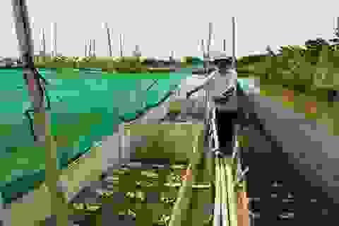 Hải Hậu (Nam Định): Hơn 220 trang trại, gia trại do cựu chiến binh làm chủ