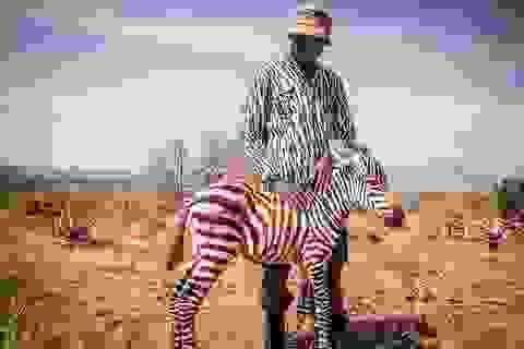 Bức ảnh kể về sự tồn tại khắc nghiệt trong thế giới tự nhiên