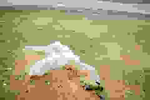 Băng tan và đói khát có thể đẩy những con gấu Bắc Cực đến tuyệt chủng
