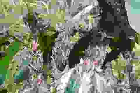 8 tháng, châu chấu tre lưng vàng phá hoại gần 300ha cây trồng