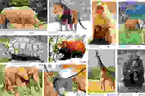 Thủ tướng chỉ thị dừng nhập khẩu động vật hoang dã