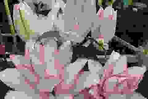 """Hoa ly Đà Lạt bị """"gắn mác"""" hoa nhập khẩu, rao bán đắt gấp 4-5 lần"""