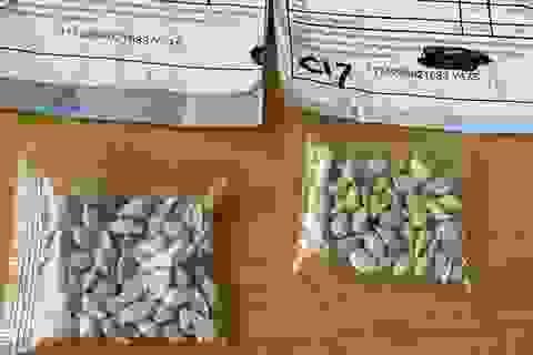 Mỹ điều tra vụ việc nhiều người nhận được hạt giống bí ẩn từ Trung Quốc