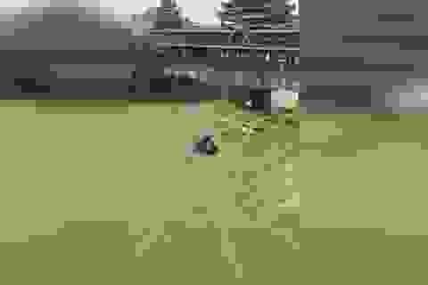 Cận cảnh đường biến thành sông, lũ cuốn phăng ô tô ở Trung Quốc