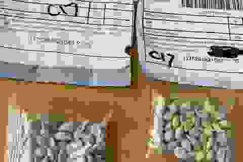 Bắc Kinh lên tiếng vụ người Mỹ nhận được hạt giống bí ẩn từ Trung Quốc