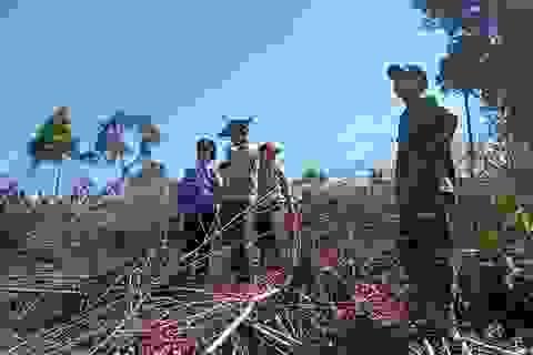 Hạt trưởng Hạt Kiểm lâm huyện Bắc Trà My bị dọa giết