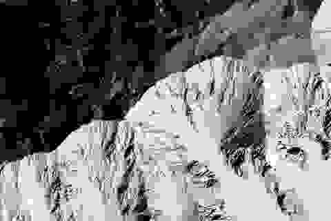 Nhà khoa học tin rằng sự sống tồn tại bên dưới bề mặt Sao Hỏa
