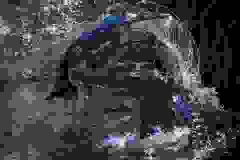 """Ngoạn mục cảnh cá sấu """"xử lý"""" lợn rừng như xiếc"""