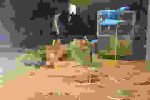 Hà Nội: Khởi tố vụ án sập giàn giáo khiến 4 công nhân tử vong