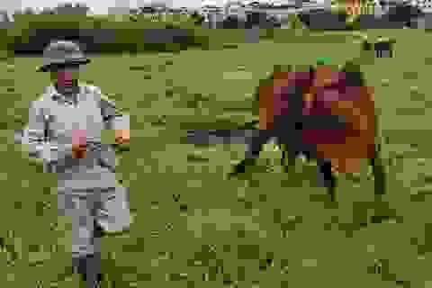 Hà Nội: Cấm chăn nuôi trong nội thành, người dân chuyển nghề ra sao?