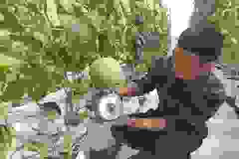 Hà Tĩnh: Thanh niên 8X bỏ túi nửa tỷ đồng một năm từ nghề trồng dưa