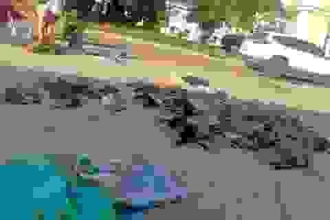 Đề xuất Bộ Công an tăng cường chế tài xử phạt đối tượng trộm chó