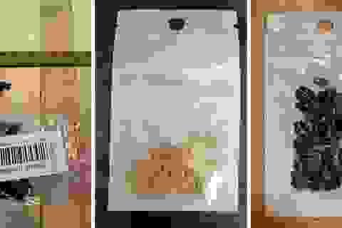 """Mỹ """"giải mã"""" hạt giống bí ẩn nghi gửi từ Trung Quốc"""