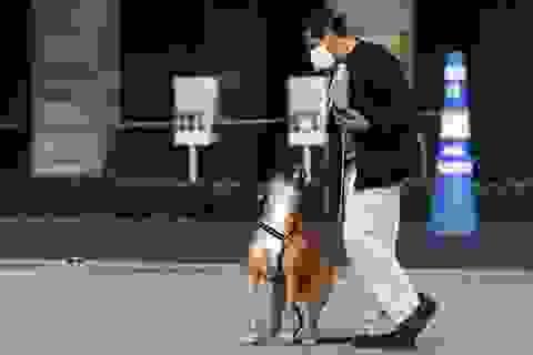 Chó được huấn luyện ngửi phát hiện virus corona chính xác gần 100%