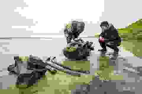 Tìm thấy hài cốt của voi ma mút vạn năm tuổi còn cả da và mô mềm