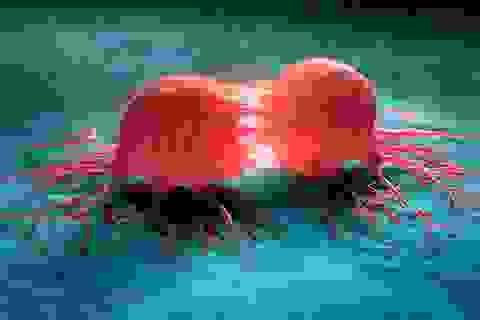 Cách tế bào ung thư qua mặt hệ miễn dịch