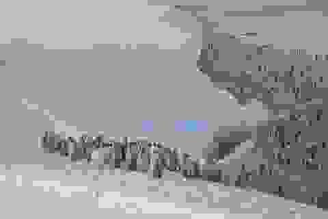 Phát hiện vùng đất chim cánh cụt lớn nhất Trái đất sống